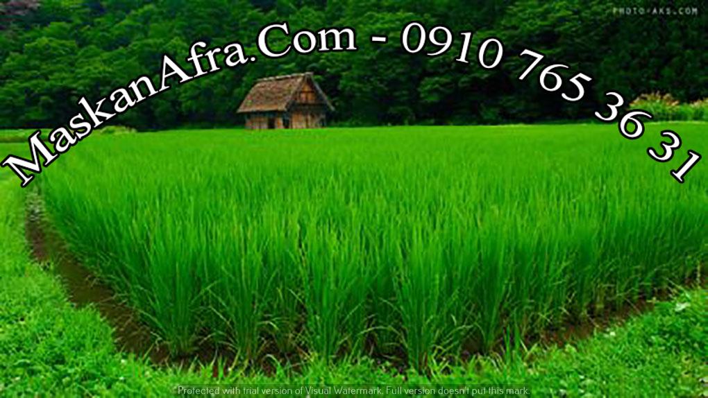 فروش-زمین(کشاورزی)-بندر انزلی-تربگوده-۸۰۰۰متر زمین